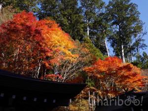 img_article_chichibu-16