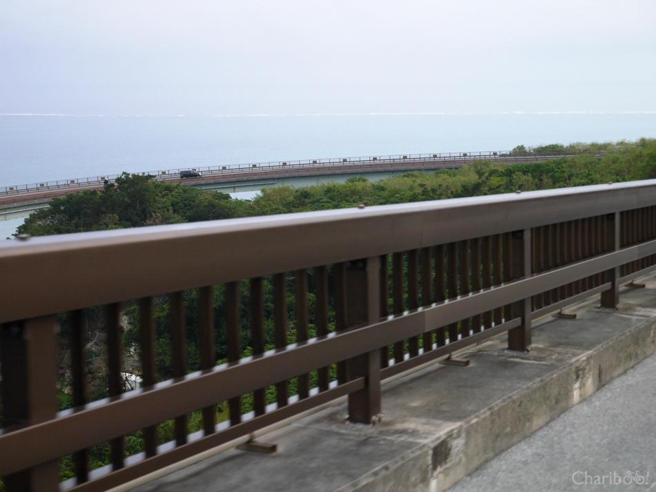 img_article_okinawa17-5